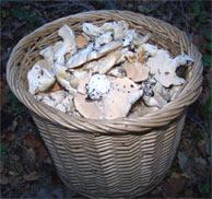 Meubles design salle champignons pieds - Comment cuisiner les pieds de mouton ...