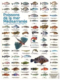 Affiche poster de 66 photos de poissons de la mer m diterran e - Grand poisson de mer ...